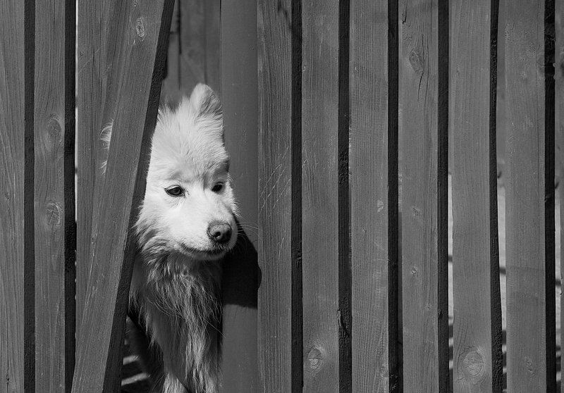 Из жизни собачьейphoto preview