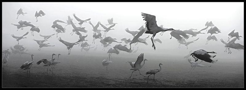 Стартуем в тумане ...photo preview