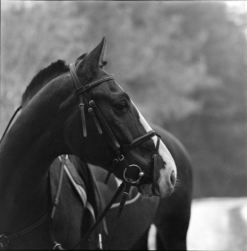 , hasselblad, Kodak, конь, пленка, Средний формат, Ч/б Рамзесphoto preview