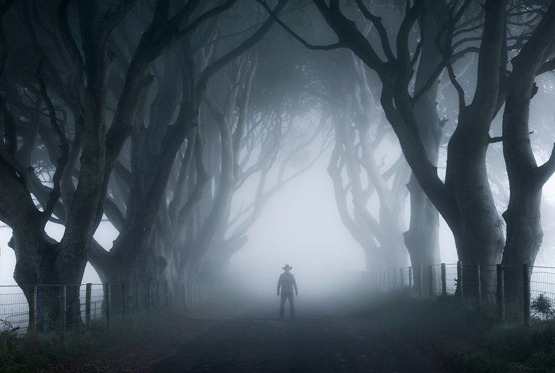 The Dark Hedges, trees, fog, Ireland, Antrim, self-portrait, northern ireland, morning,  The Dark Hedges photo preview