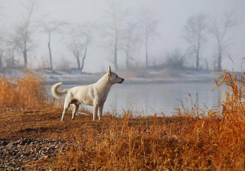 Предчувствие близкой зимы...photo preview