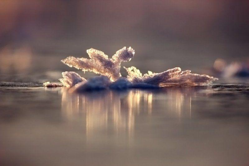 Ледниковый период.photo preview