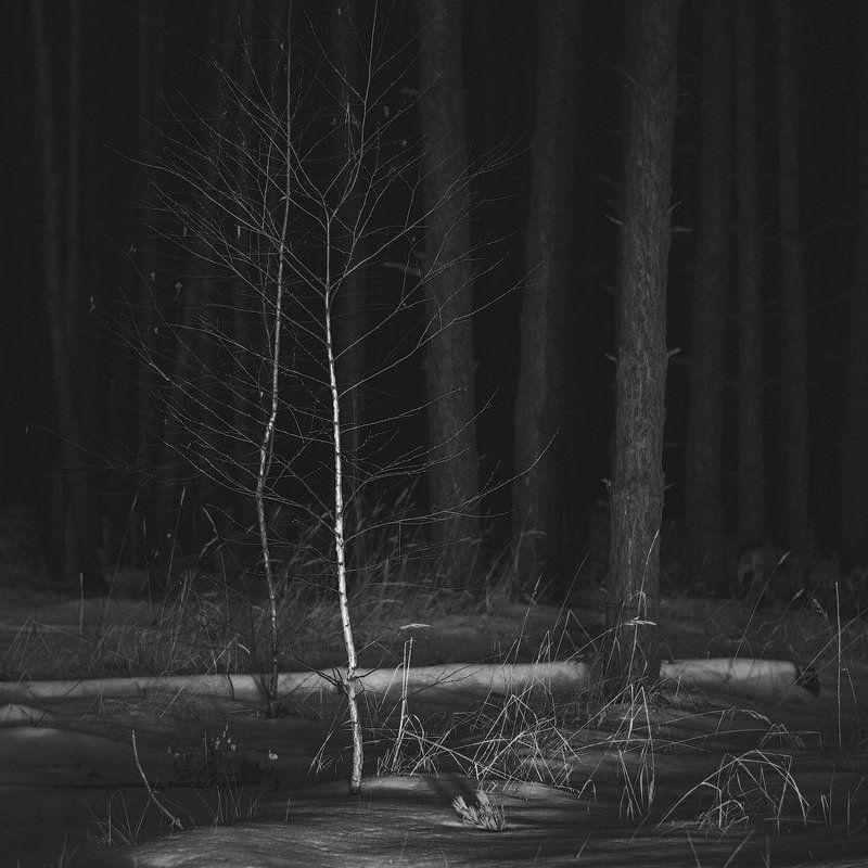 березы, лес, мороз, ночь, снег, сосны, трава Две стороныphoto preview