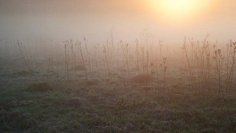 ...слезы майских изумрудов...photo preview