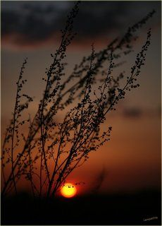 Танец уходящему солнцу 2