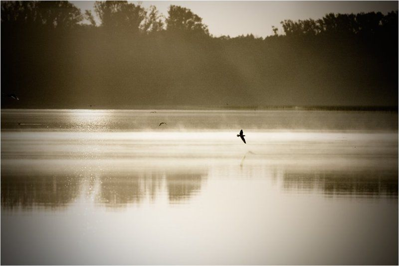 озеро, архимандритское, башкирия Мотыльки летящие на светphoto preview