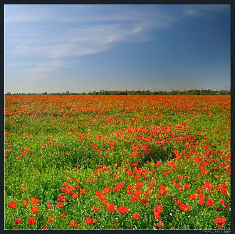 весна,поле,цветы,маки Веснаphoto preview