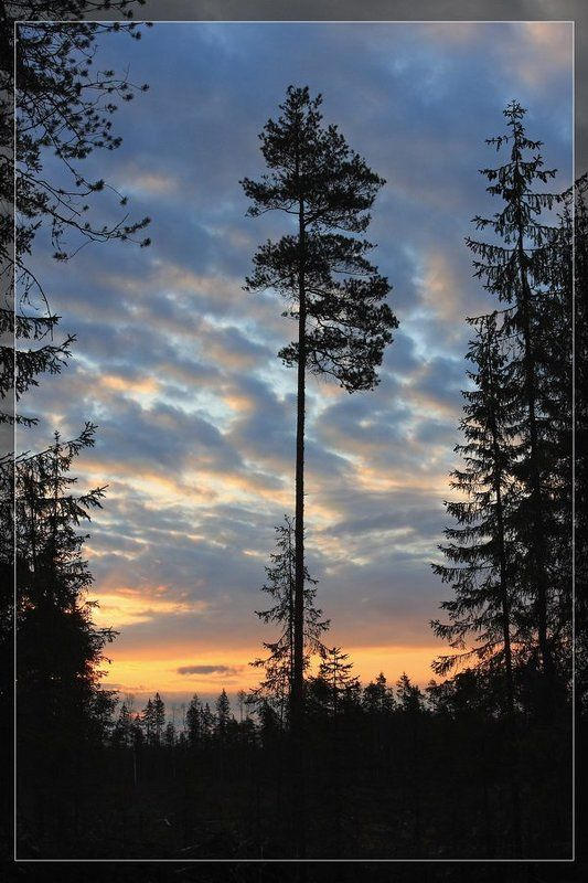 восход, шугозеро, силуэт Новый деньphoto preview