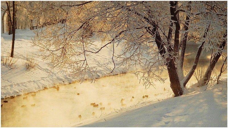 пейзаж, природа, зима, рассвет, река, птицы Купающиеся в рассветных лучахphoto preview