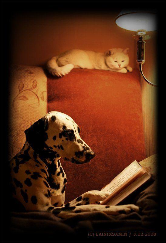 собака, кошка, книга почитай мне перед сномphoto preview