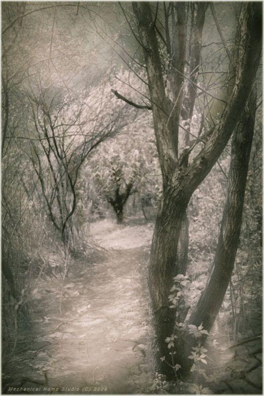 лес, тропы, ветви ...photo preview