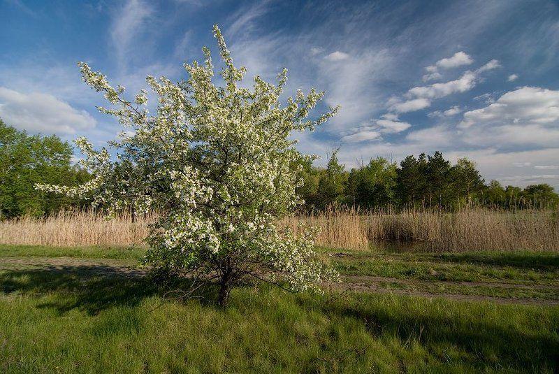 Сибирская веснаphoto preview