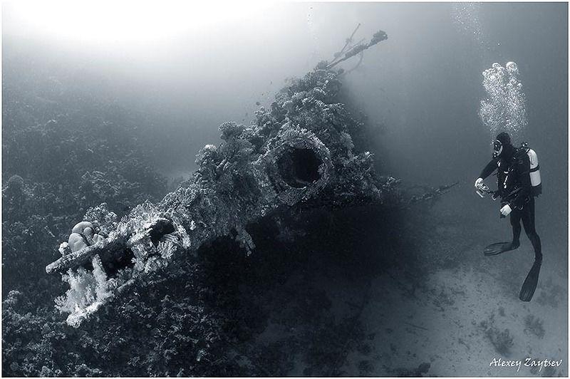 зайцев, обучение, подводной, фотографии, , красное, море, рэк Карнатик. Носовая часть.photo preview