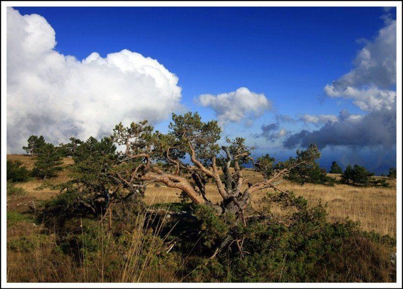 деревоphoto preview