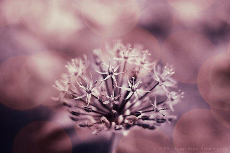 цветы звёздный цветокphoto preview