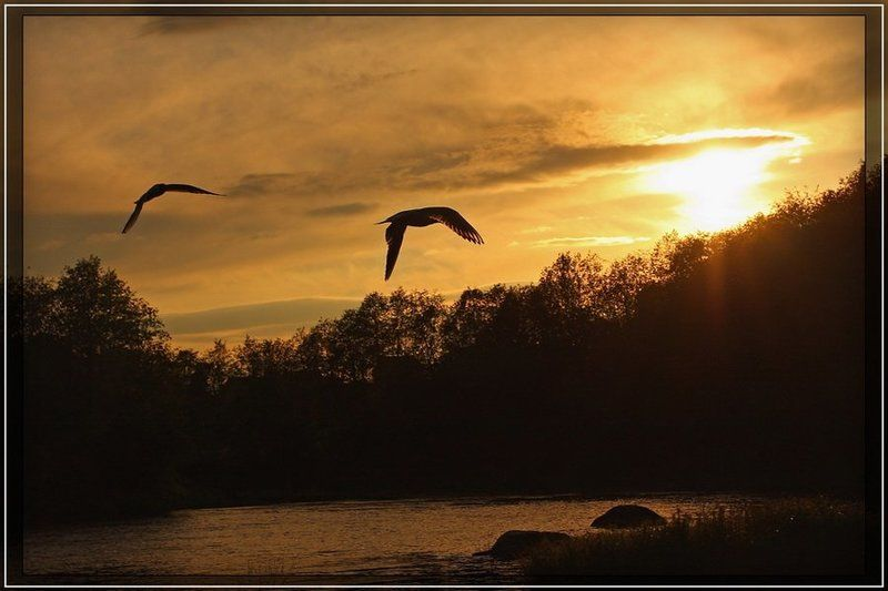 закат, солнце, птицы, силуэт Вслед за солнцемphoto preview