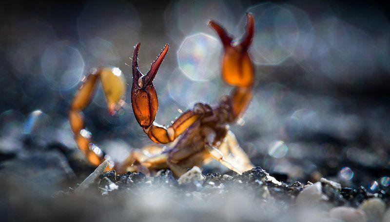 Фото...ФотоОхота на скорпиона.photo preview