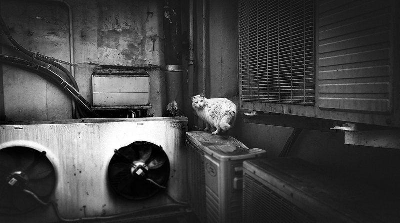 Black & white, Cat, City, Saint-Petersburg, Street ***photo preview