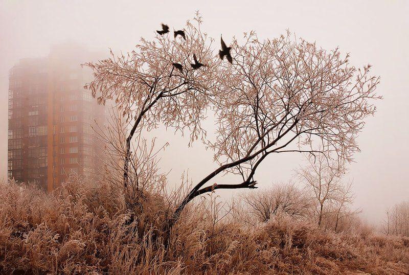 Птицы воскресные...Крылья застуженыphoto preview