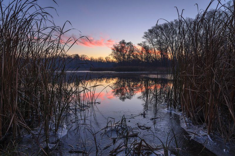 деревья, зима, камыш, лед, озеро, рассвет Ломая кромку льдаphoto preview