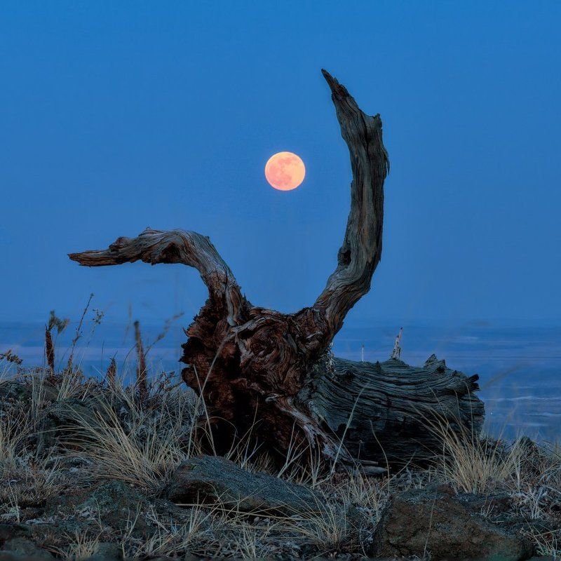 Башкирия, Весна, Луна, Нурали Moon Hunterphoto preview