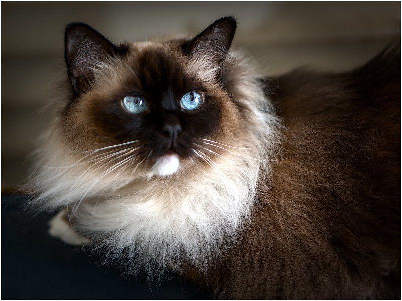 Слушая D. Scarlatti: Cat\'s fugue K 30 L 499 in G Minor photo preview