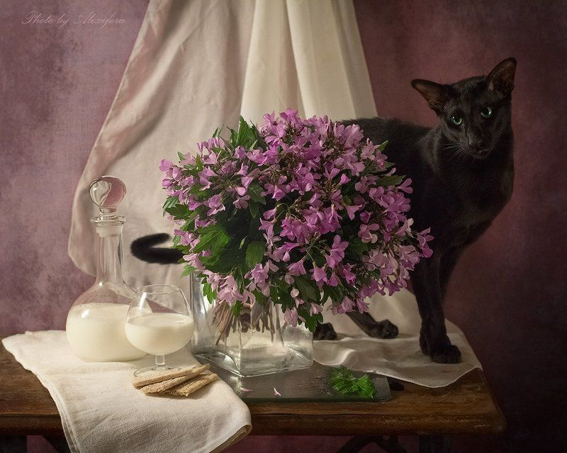 Про черного котаphoto preview