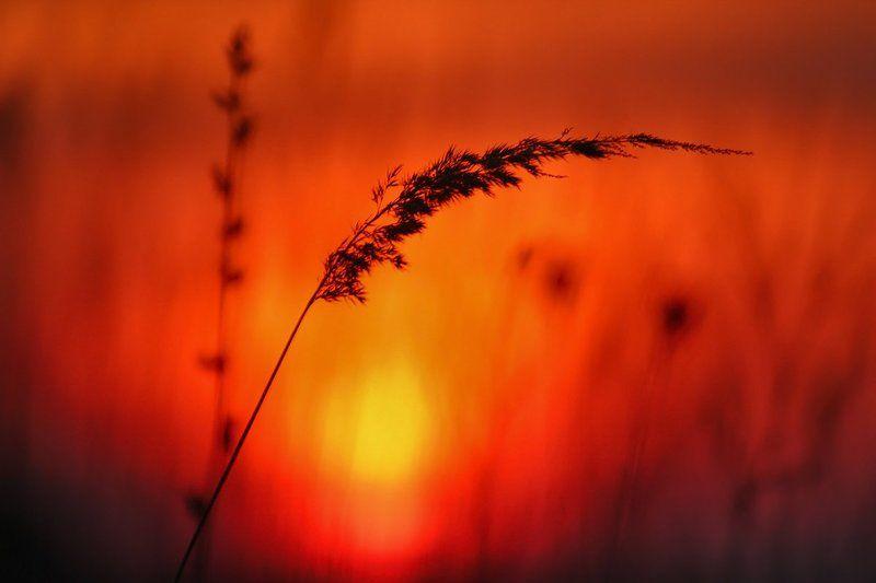 На закате дня.photo preview