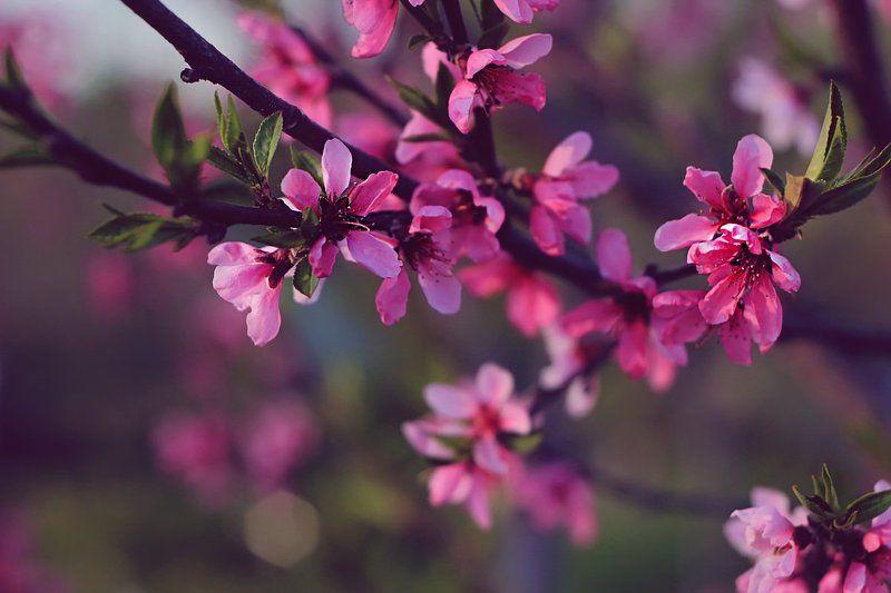 Природавесна Весна пришла...photo preview