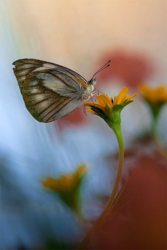 Butterfly Butterflyphoto preview