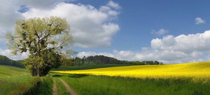 Весенний колоритphoto preview