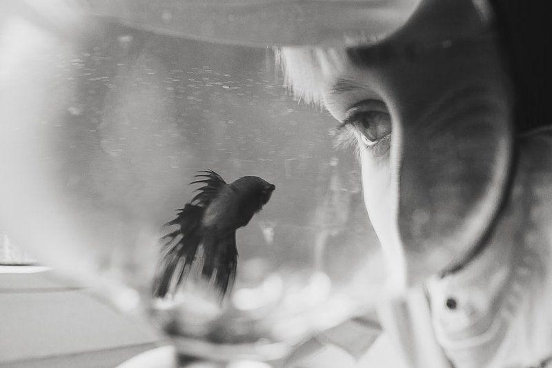 мальчик, взгляд, глаз, рыбка, аквариум Глаза в глазаphoto preview