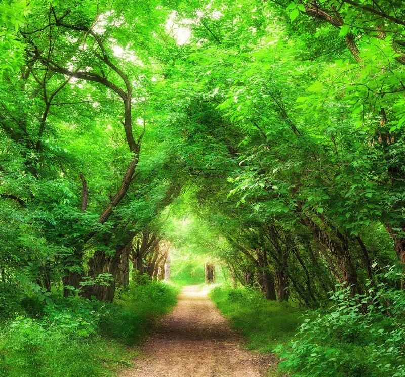 Арка, Весна, Деревья, Лес, Май, Природа, Солнечно, Тропинка, Украина Прогулка по лесуphoto preview