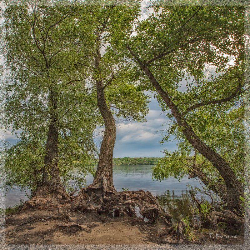 река,деревья,весна Три грацииphoto preview