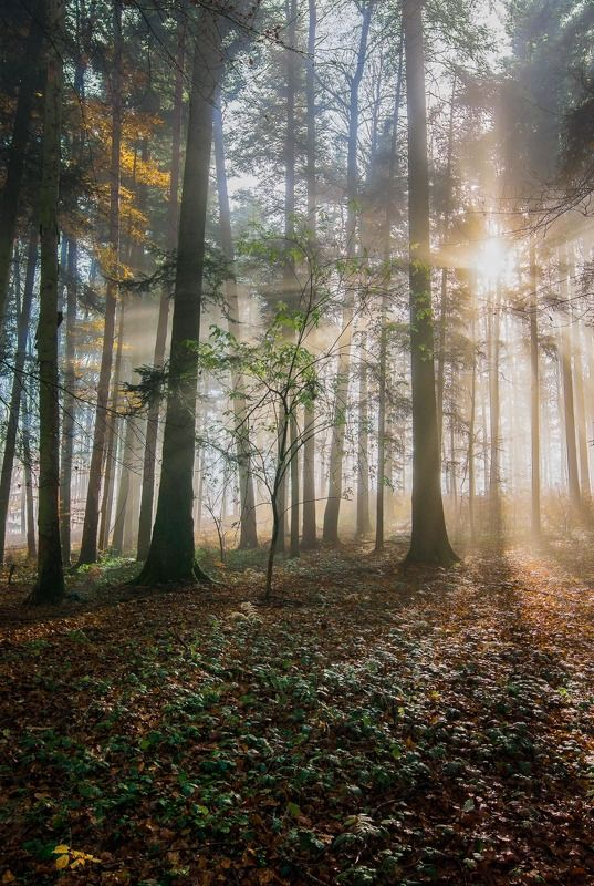 switzerland, forest, sun, fog, autumn Magic Fores 2photo preview