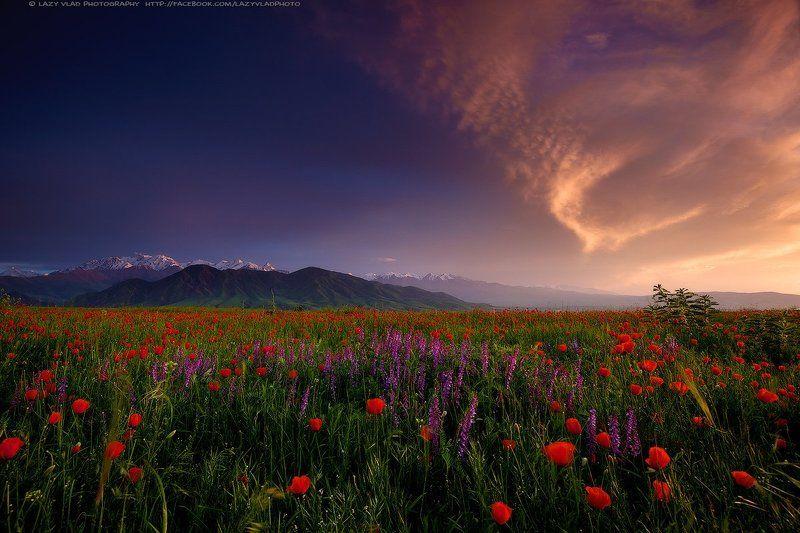 киргизия, бишкек, ала-тоо, горы, май, маки, горные цветы, lazy_vlad, lazyvladphoto За гранью Света и Тьмыphoto preview