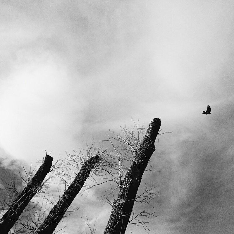 Bird, Black & white, Photo, Tree ***photo preview