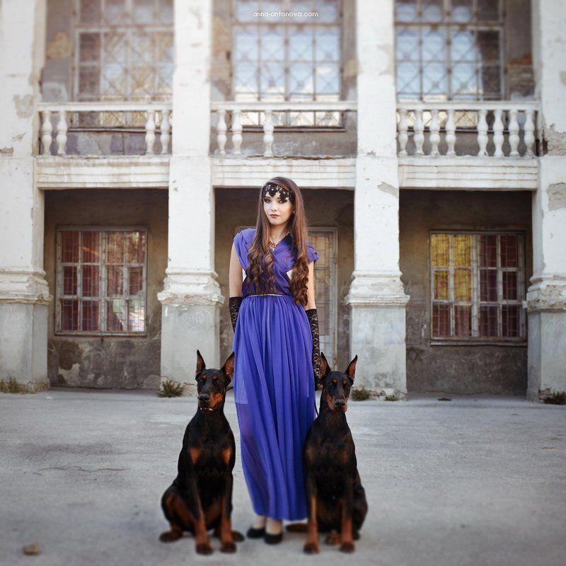 portpait, dog, doberman, girl photo preview
