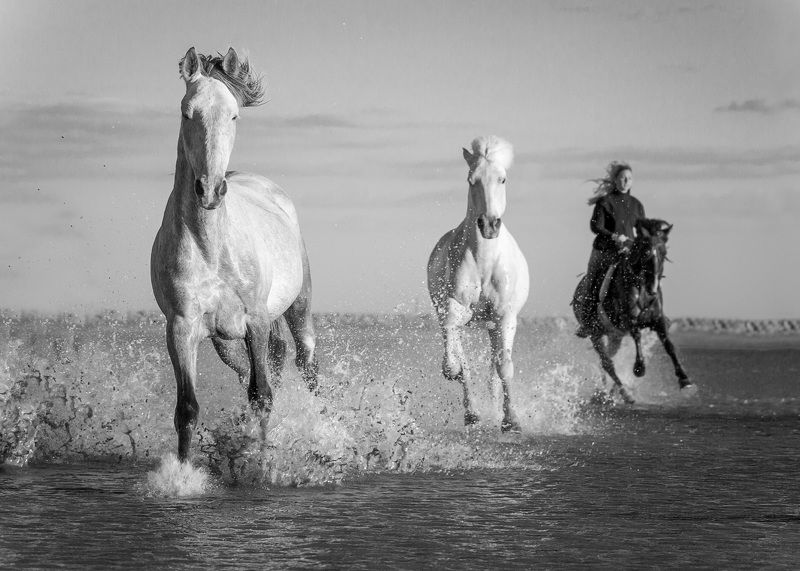 horses, France, Camargue  France, Camarguephoto preview