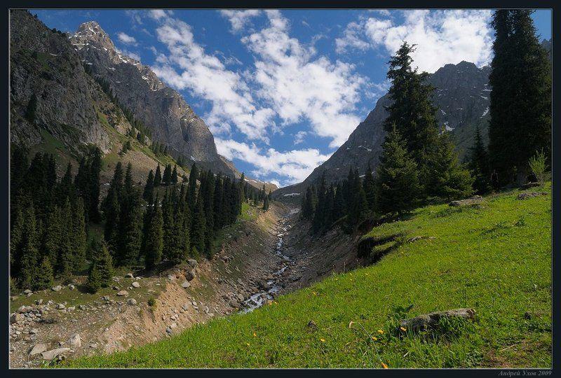 природа,горы,лето,ущелье,лес,цветы,скалы,деревья,трава,облака,река,елки В горы пришло летоphoto preview