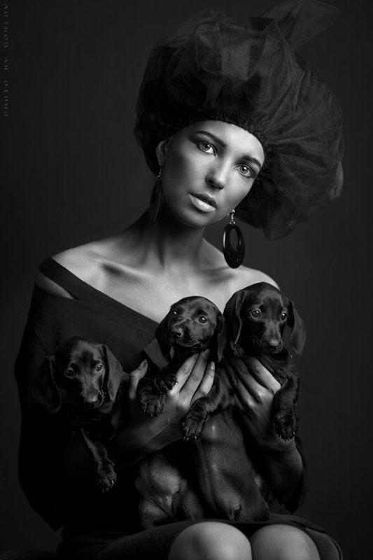 красота, она, внутри Three of my dogsphoto preview