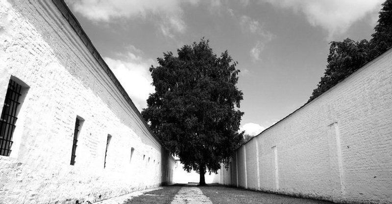 дерево, тропа, тюрьма, солнце, небо &&photo preview