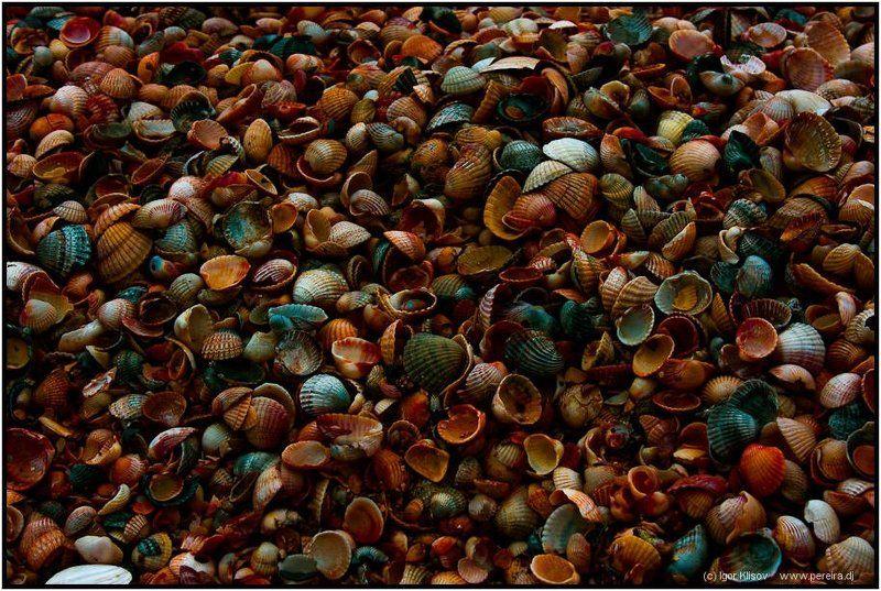 ракушки, азовское море, пляж Текстуркаphoto preview