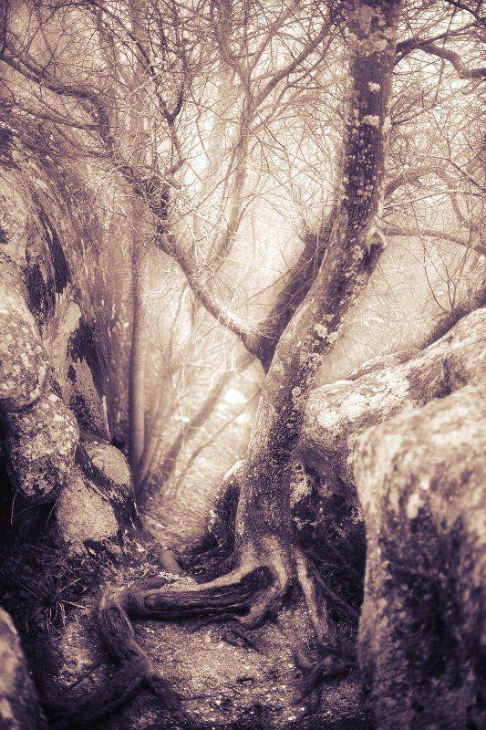 горы, деревья, лес, крым, сон, мечты, волшебство fragile hiding-place drea...photo preview