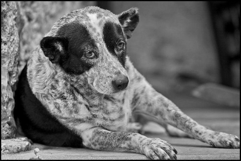 Тяжела собачья жизнь...photo preview
