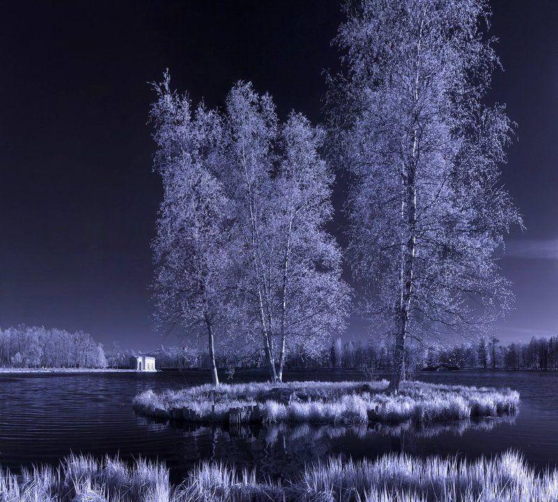 infrared, весна, дерево, деревья, закат, инфракрасная съемка, инфракрасный,  инфракрасное, лес, листва, небо, необычный, парк, солнце, цвет ~130~photo preview