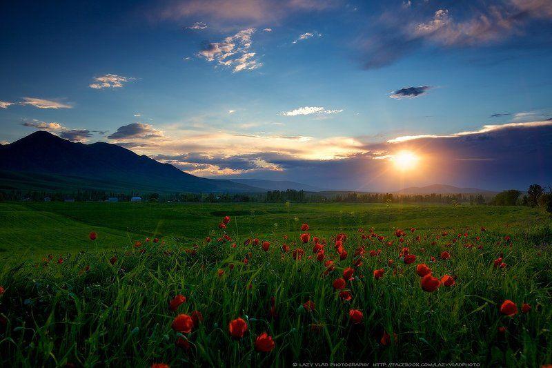 киргизия, бишкек, ала-тоо, горы, май, маки, горные цветы, lazy_vlad, lazyvladphoto Таинство весеннего вечераphoto preview