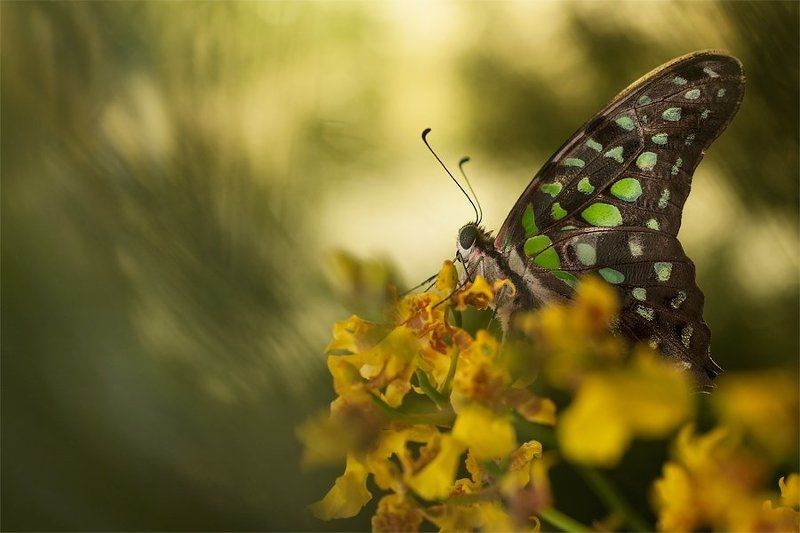 butterfly, orchid, flower, mood morning gloryphoto preview