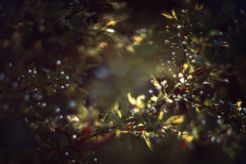 plum blossomphoto preview