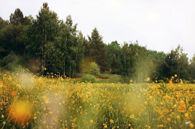 цветы, поле, лес, день, трава, луг, жарки Поляна жарковphoto preview